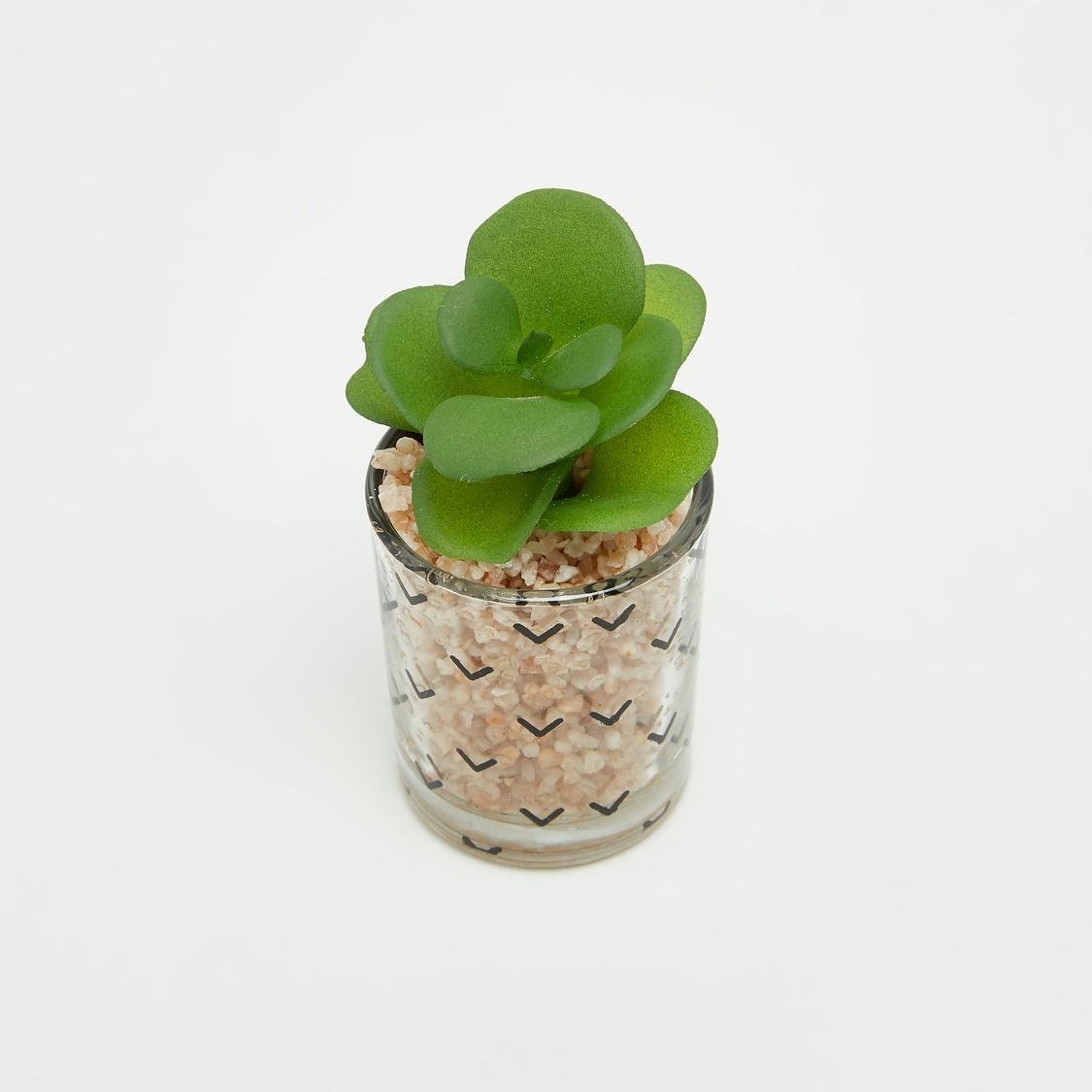 نبتة في إصيص  - 6x6 سم