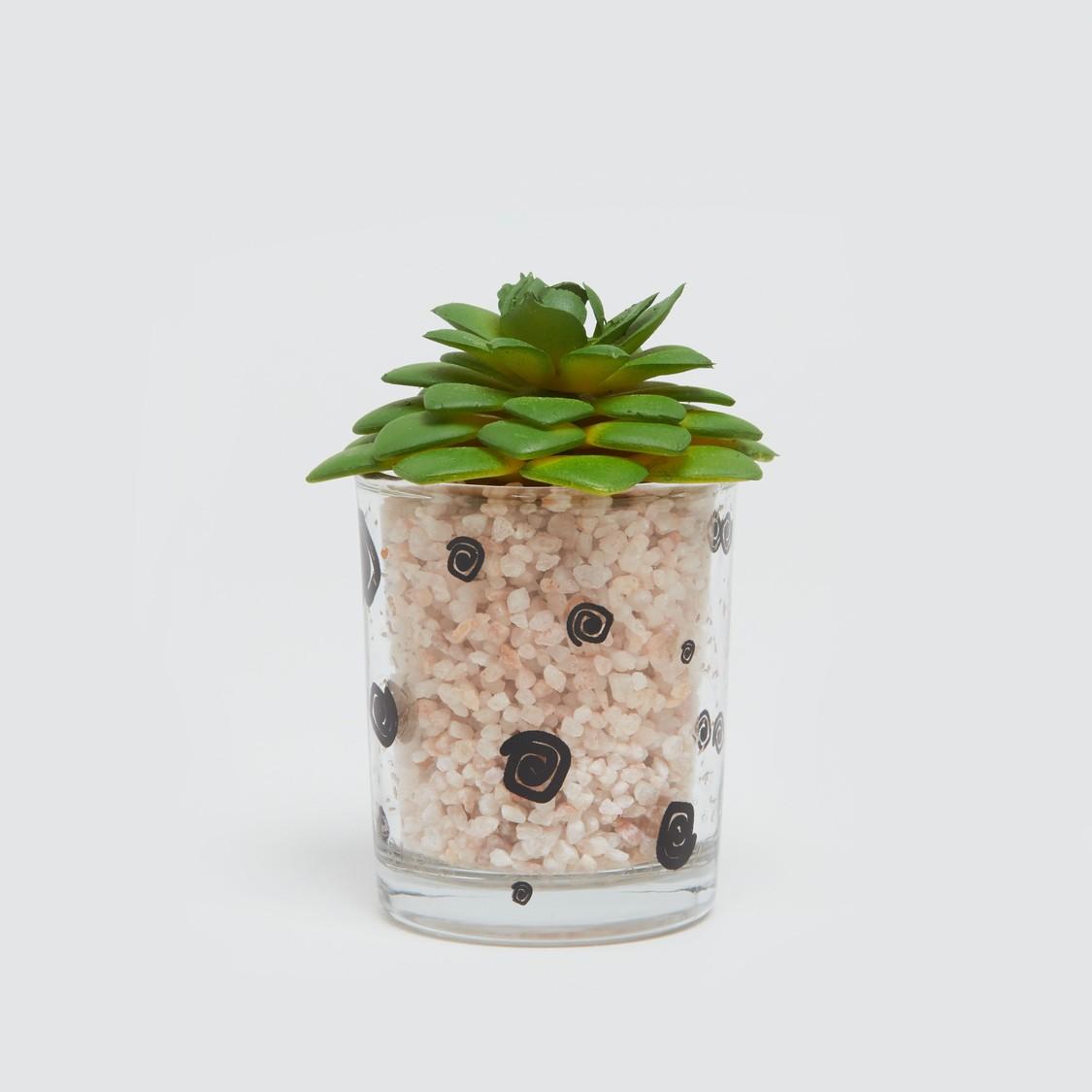نبات في إصيص - 6x6 سم