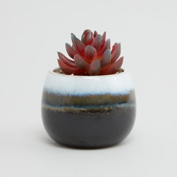 Potted Plant - 11x11 cms
