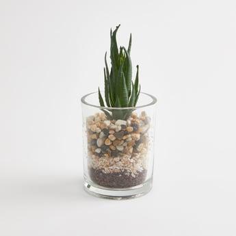 نبتة في إصيص للديكور