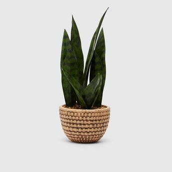 Artificial Plant in Textured Pot