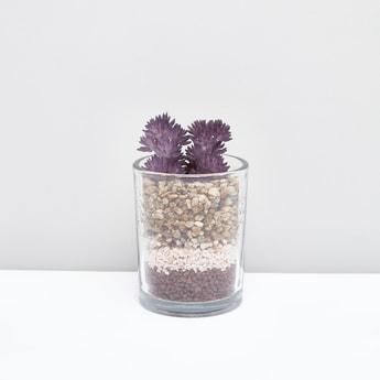 مزهرية شفافة بنباتات زينة
