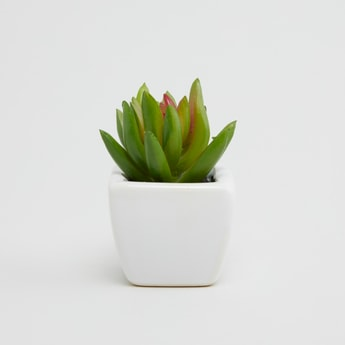 Potted Plant - 5x5 cms
