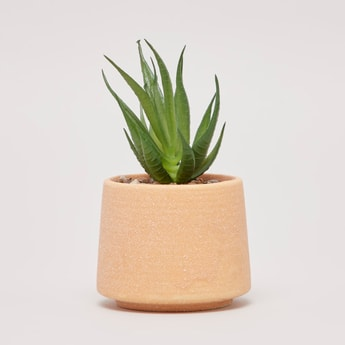 Artificial Aloe Vera Potted Plant