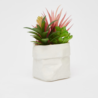 Potted Plant with Succulents