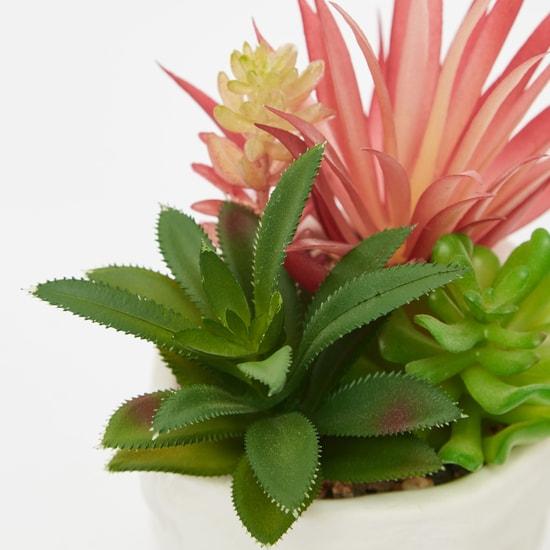 أصيص نبات مع نبات العصاري