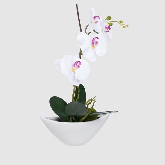 نبتة زينة في وعاء