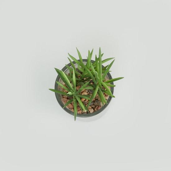 Decorative Potted Plant